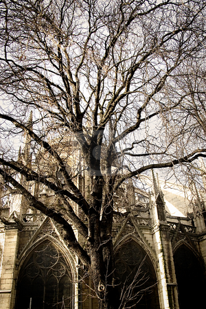 Old tree covering notre dame cathedral stock photo, An old tree in front of Notre Dame by Heiko Riemann