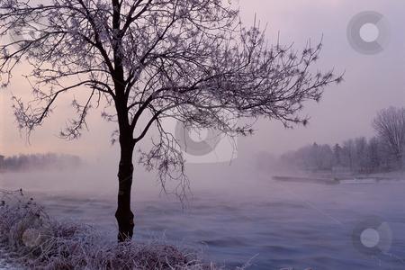 MPIXIS250455 stock photo, Tree near misty river by Mpixis World