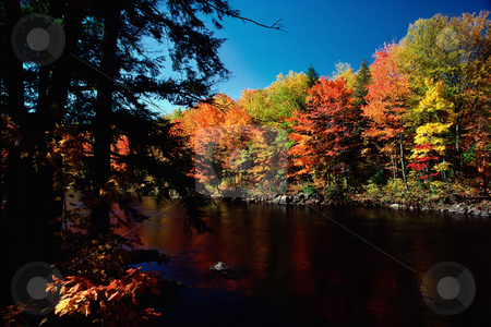 Autumn forest and lake stock photo, Autumn forest and lake by Mpixis World