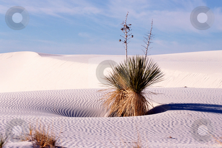 MPIXIS250354 stock photo, Remains of an oasis in desert by Mpixis World