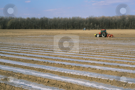 MPIXIS250720 stock photo, Tractors planting crops in field by Mpixis World