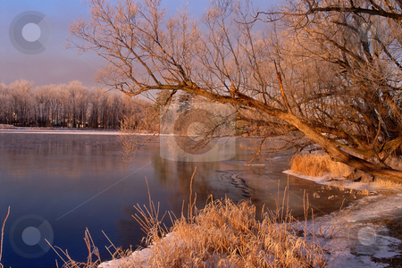 MPIXIS250457 stock photo, Winter trees reflected in river by Mpixis World