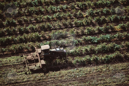 MPIXIS250619 stock photo, Tractor harvesting crops by Mpixis World
