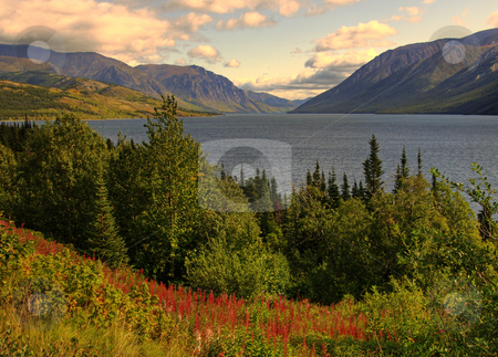 Colorful Moment in the Yukon stock photo, A field of wildflowers bloom on a hill overlooking a rural lake by Jeff Clow