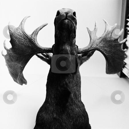 MPIXIS250492 stock photo, Stuffed moose by Mpixis World