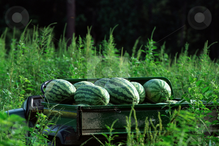 MPIXIS250585 stock photo, Melons in truck by Mpixis World