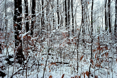 MPIXIS250539 stock photo, Snow covered forest by Mpixis World