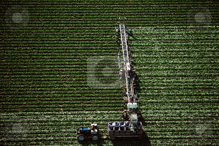 MPIXIS250617 stock photo, Farm workers harvesting by Mpixis World