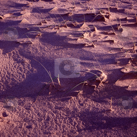 MPIXIS250296 stock photo, Grass in sandy ground by Mpixis World