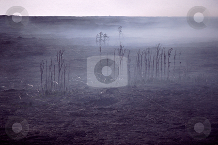 MPIXIS250311 stock photo, Trees killed by lava flow by Mpixis World