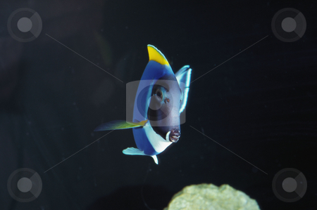 MPIXIS250372 stock photo, Exotic fish by Mpixis World