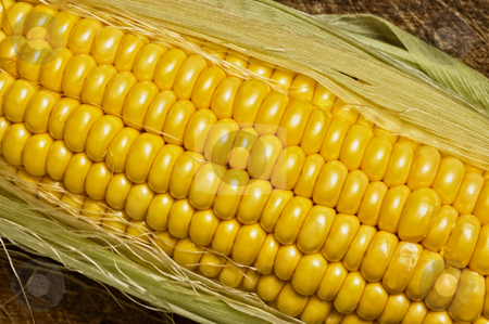 Corn on the cob stock photo, Corn on the cob, isolated on wooden table. by Pablo Caridad