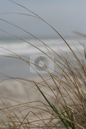 Beach grass stock photo,  by Caitlin Giles