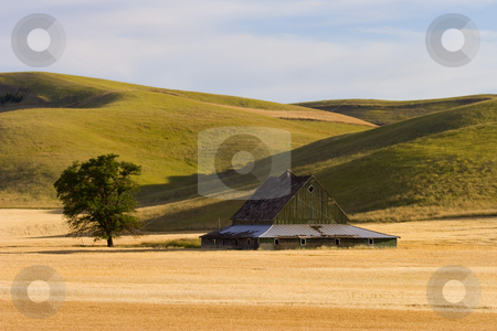 Pakouse Barn stock photo, A weather old barn sitting astride a golden wheat field among the Palouse Hills of Eastern Washington. by Mike Dawson