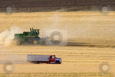 Harvest Time stock photo, A combine and truck rolling through a golden wheatfield at harvest time. by Mike Dawson