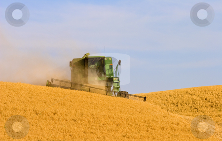Golden Harvest stock photo, A combine harvesting wheat on a hill in the Palouse area of Eastern Washington. by Mike Dawson