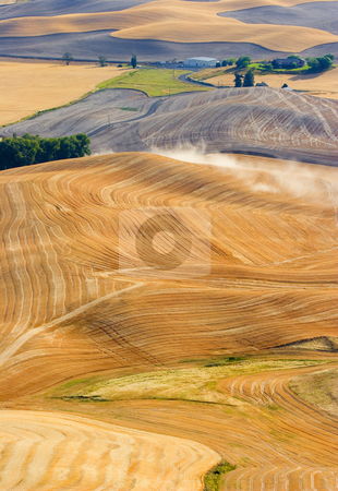 Rural  stock photo, PAtterns and Lines formed by the combines as they harvest the golden wheat from the hills of the Palouse in Eastern Washington by Mike Dawson