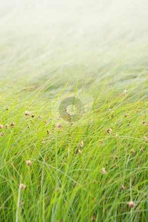 Grass background stock photo, Grassy background with copy space by Tilo