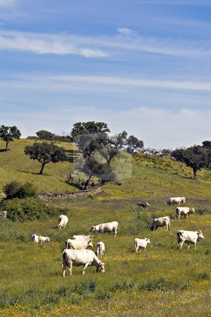 Landscape with cows stock photo, Some cows in mountain hills in Portugal by Paulo Resende