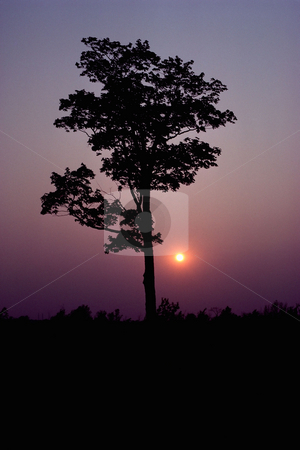 MPIXIS250540 stock photo, Silhouetted tree at sunset by Mpixis World