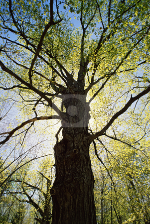 MPIXIS250705 stock photo, Tree in spring time by Mpixis World