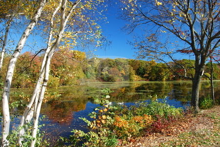 Pond Scene stock photo, Fall pond scene by Bill Parmentier