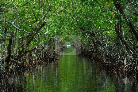 The Everglades stock photo, This picture was taken in the Everglades. by Matthew Schwartz
