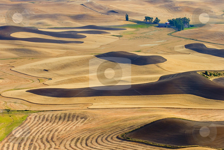 Harvest Gold stock photo, Golden Fields of Wheat, newly tilled land and harvest wheat all  contribute to the lines and patterns that make up this pastroal scene from the Palouse Hills. Taken from the top of Steptoe Butte. by Mike Dawson