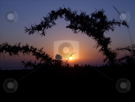 Sunset in the Savanah stock photo, A beautiful sunset in the Amboseli, Kenya as seen through the branches of a thorn bush. by Rose Nthiwa