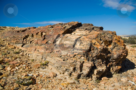 Petrified wood in Patagonia stock photo, Petrified wood in Patagonia, Southern Argentina. by Pablo Caridad