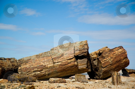 Petrified wood in Patagonia, Southern Argentina. stock photo, Petrified wood in Patagonia, Southern Argentina. by Pablo Caridad