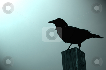Crow silhouette stock photo, Silhouette of crow in Ft. Lauderdale by Gary Pond