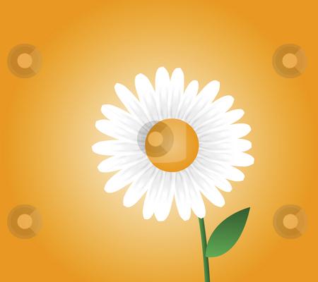 Daisy Illustration stock photo, Daisy with orange background by John Teeter