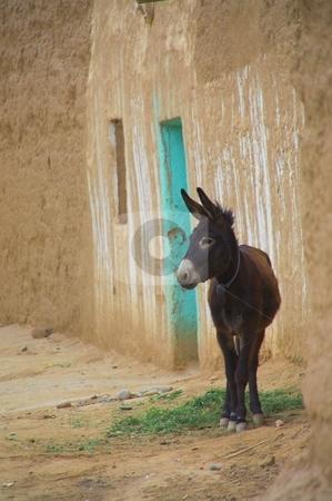 Donkey infront of a moroccan house stock photo, A donkey, standing infront of a moroccan house by Szilard Kun