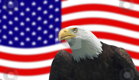 American Bald Eagle stock photo, Bald Eagle in front of American Flag by Pierre Landry