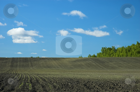 Early growth in farm field stock photo, View of early growth on beautiful spring morning. by Pierre Landry