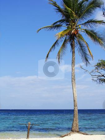 Palm Tree stock photo, Palm Tree at the beautiful Morrocoy National Park, Venezuela by Maria Alessandra Nusiner