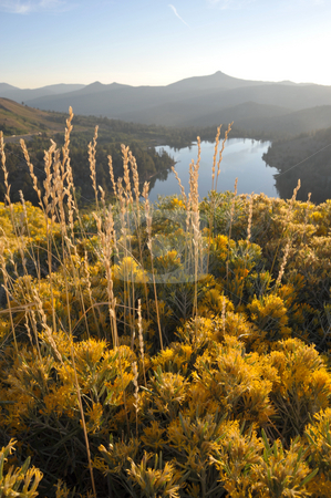 Sierra Fall Colors stock photo, Fall wild flowers and dry grasses glow in the early morning golden glow of the sunrise. by Lynn Bendickson