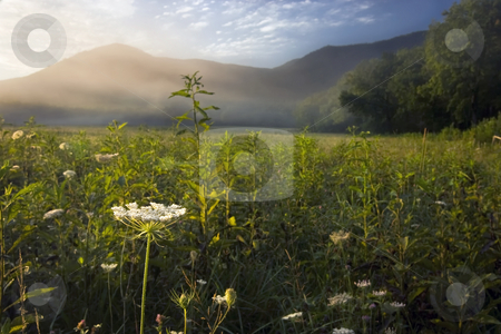 Morning in Cades Cove GSMNP stock photo, The Queen Ann's lace caught my when the sunlight first hit the dew. At this time of the morning the light and shadows were constantly changing. A beautiful morning in Cades Cove of the Great Smoky Mountains NP. by Greg Hutson