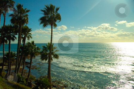 Palm trees at an isolated beach stock photo, Palm trees at an isolated beach by Nilanjan Bhattacharya