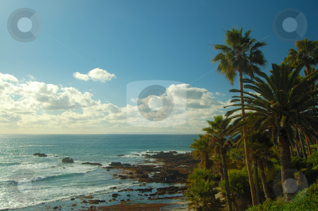 The Palm Grove at coast stock photo, A coastal palm grove at the ocean side by Nilanjan Bhattacharya