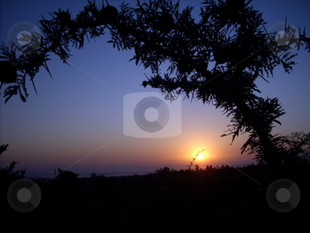 Sunset view through thorn bush stock photo, Sunset view  through a thorn bush in the Amboseli, Kenya. by Rose Nthiwa
