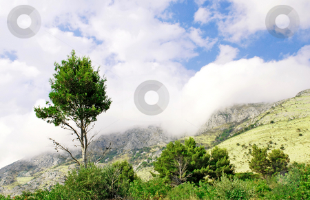 Mountain fog and single tree stock photo, Single tree in fog over mountain landscape by Julija Sapic