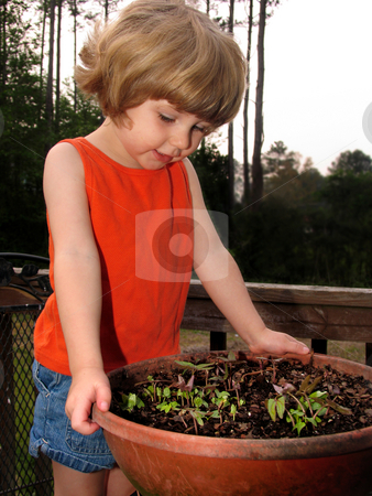 Girl with seedlings stock photo, Little girl looking at tiny seedlings in a flower pot by Anita Peppers