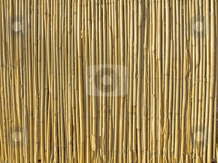 Sedge stock photo, Sedge texture or background, by Sinisa Botas