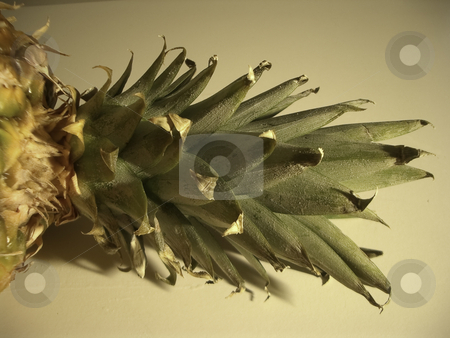 Pineapple-013 stock photo, Pineapple-013 by Creative Shield