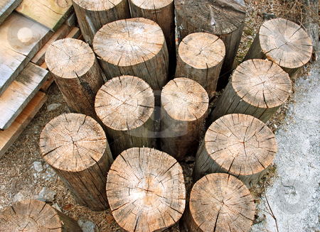 Wooden logs stock photo, Old dry Wooden logs vertical abstract by Julija Sapic