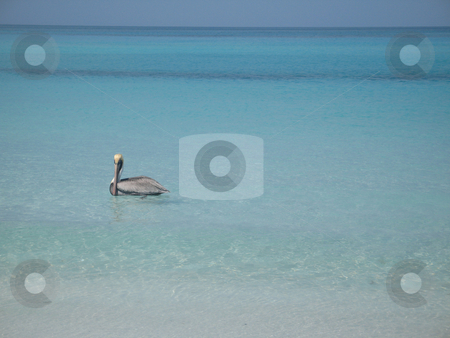 Pelican on the ocean stock photo,  by Mbudley Mbudley