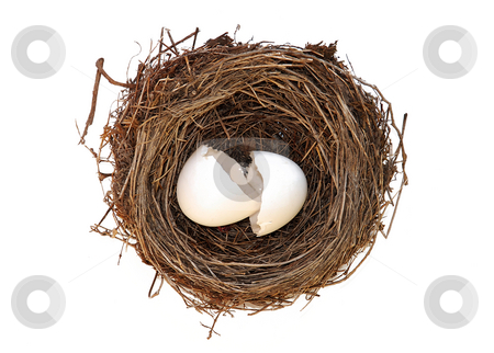 Birthday stock photo, Broken empty egg in nest isolated over white by Julija Sapic