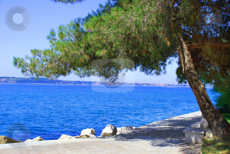 Sea and pine landscape stock photo, Adriatic sea coast in pine tree frame in Portoroz, Slovenia by Julija Sapic